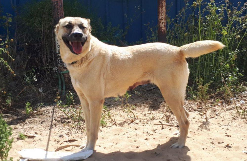 צעיר אימוץ כלבים | אגודת צער בעלי חיים חיפה ע''ר BE-16